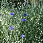 fleurs d'un jardin d'une chambre d'hotes sud finistere