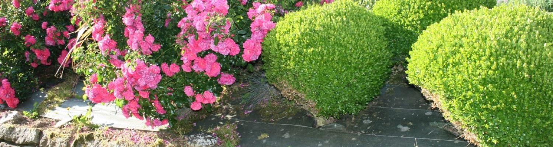 jardin de fleurs de la chambre d'hotes finistere sud