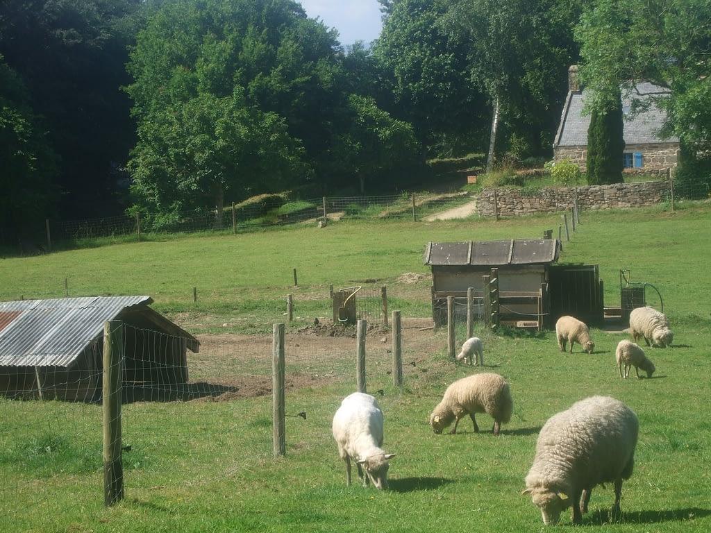 moutons plomarc'h chambres d'hôtes finistère