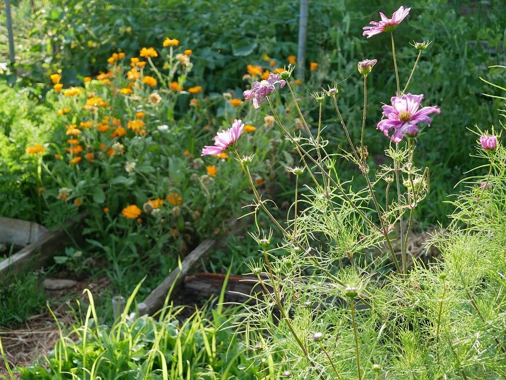 Association fleurs et légumes