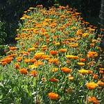 foret de fleurs d'un hebergement au sud finistere